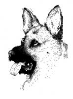 14_chien.jpg